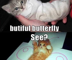 cat, butterfly, and funny image