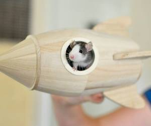 cute animals and mouse image