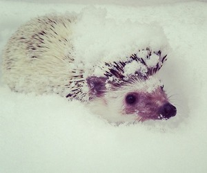 hedgehog, snow, and winter image