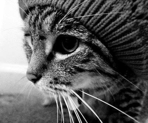cat, cute, and hat image