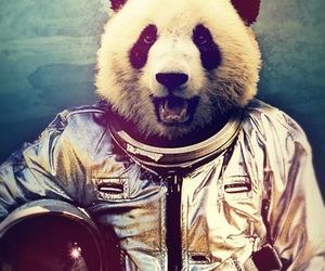 panda, space, and animal image