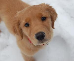 dog, puppies, and puppy image