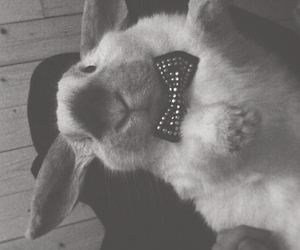 black and white, bow, and bunny image
