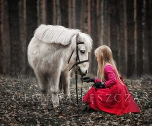 horse and konie image