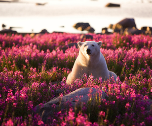 bear, flowers, and Polar Bear image
