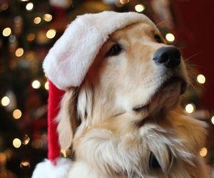 beauty, dog, and inpiration image