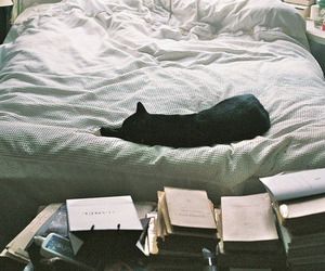 cat, book, and bed image