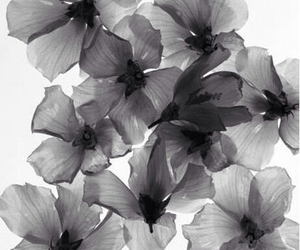flowers and black and white image
