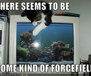 cat, funny, and lolcat image