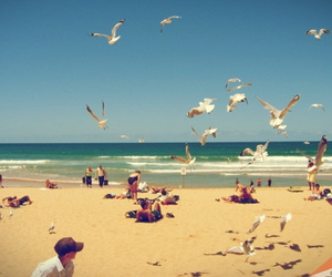 beach, manly, and seagull image