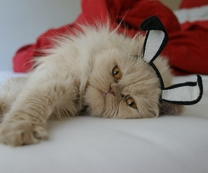 cat, adorable, and cute image