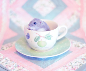 cute, hamster, and pastel image