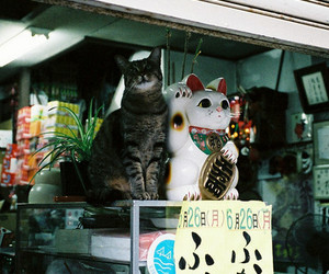 cat, japan, and lucky cat image