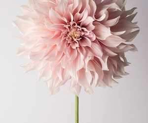 flower, wallpaper, and follow image