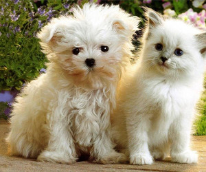 cat, dog, and puppy image