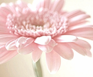flower, pretty, and girly image