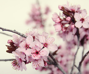 beautiful, flowers, and japan image