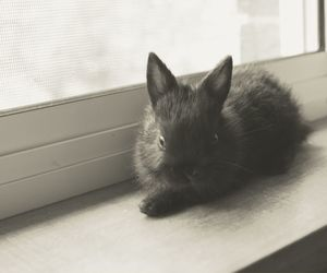 black and white, bunny, and hipster image