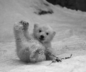 bear, snow, and Polar Bear image