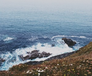 sea, nature, and flowers image