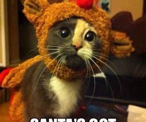 christmas, kitty, and cute image