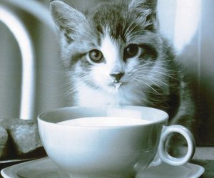 cat, cats, and so cute image