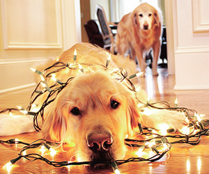 dogs, headers, and merry christmas image