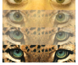 app, brown, and tiger image