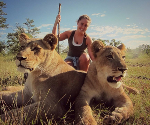 africa, lion, and lions image