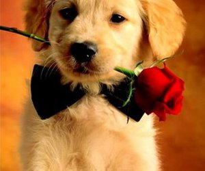 cute, dog, and rose image