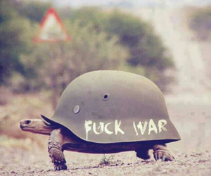 peace, tortoise, and war image