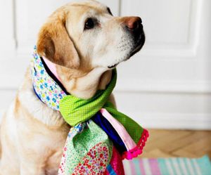 dog, cute, and scarf image