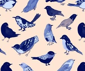 bird, blue, and background image