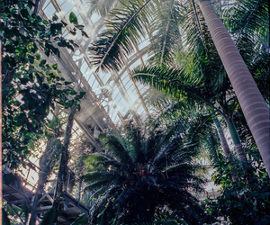 palm, tree, and tropical image