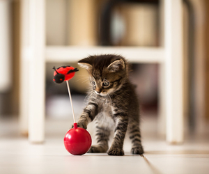 kitten, playful, and cute image