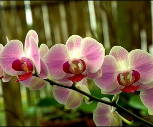 beautiful, orchids, and flowers image