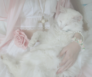 pink, cat, and pastel image