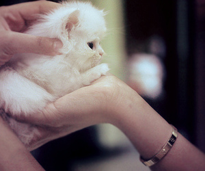 kitten, white, and cute image