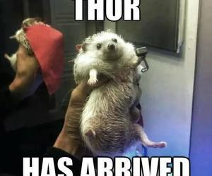 funny, hedgehog, and cute image