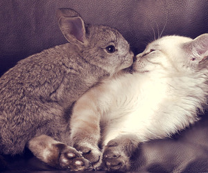 cat, rabbit, and cute image