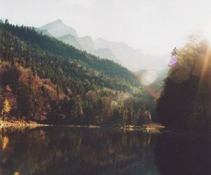 Dream, landscape, and forest image