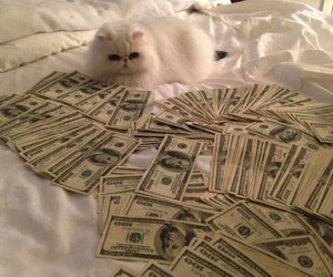 cat, money, and pink image