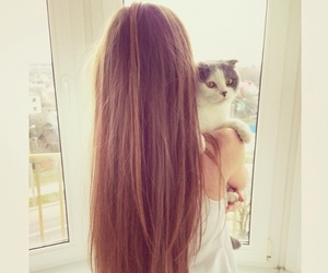 hair, cat, and girl image