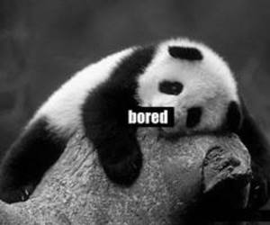 panda, animal, and bored image