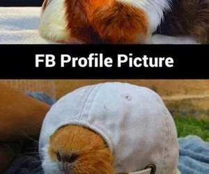 funny, facebook, and picture image