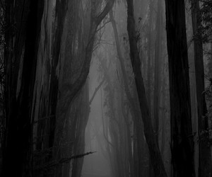 forest, landscape, and scary image