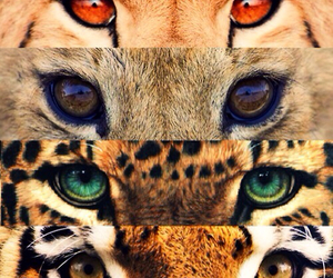 animals, cat, and tiger image