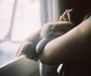 cat, photography, and sweet image