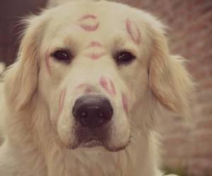 dog, kiss, and animals image