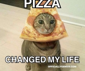 cat, pizza, and lol image